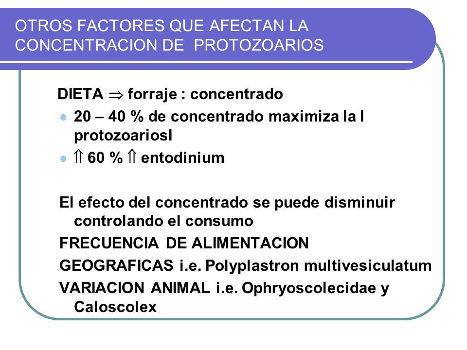 OTROS FACTORES QUE AFECTAN LA CONCENTRACION DE PROTOZOARIOS DIETA forraje : concentrado 20 – 40 % de concentrado maximiza la Ι protozoariosΙ 60 % ento