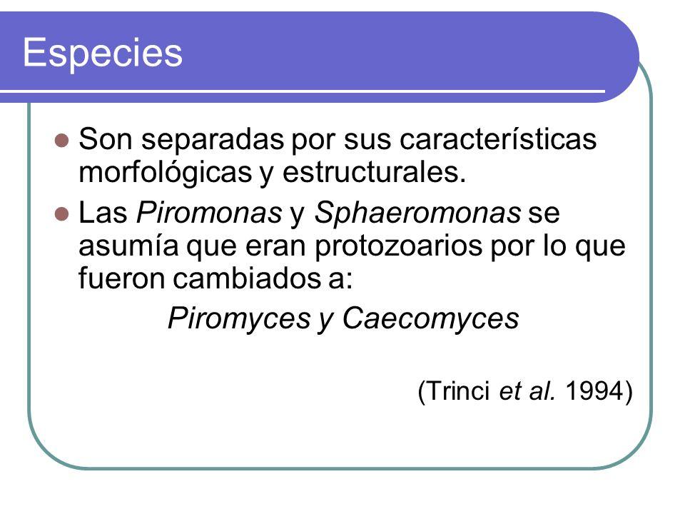 Fungis Policéntricos Neocallimastix joyonii (Breton et al.