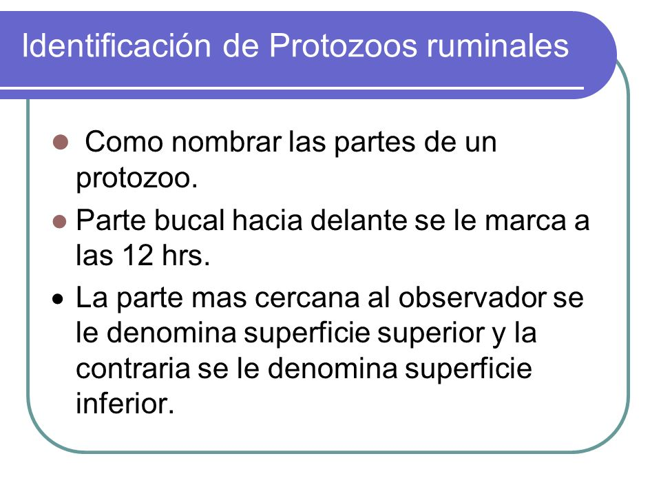 Identificación de Protozoos ruminales Como nombrar las partes de un protozoo. Parte bucal hacia delante se le marca a las 12 hrs. La parte mas cercana