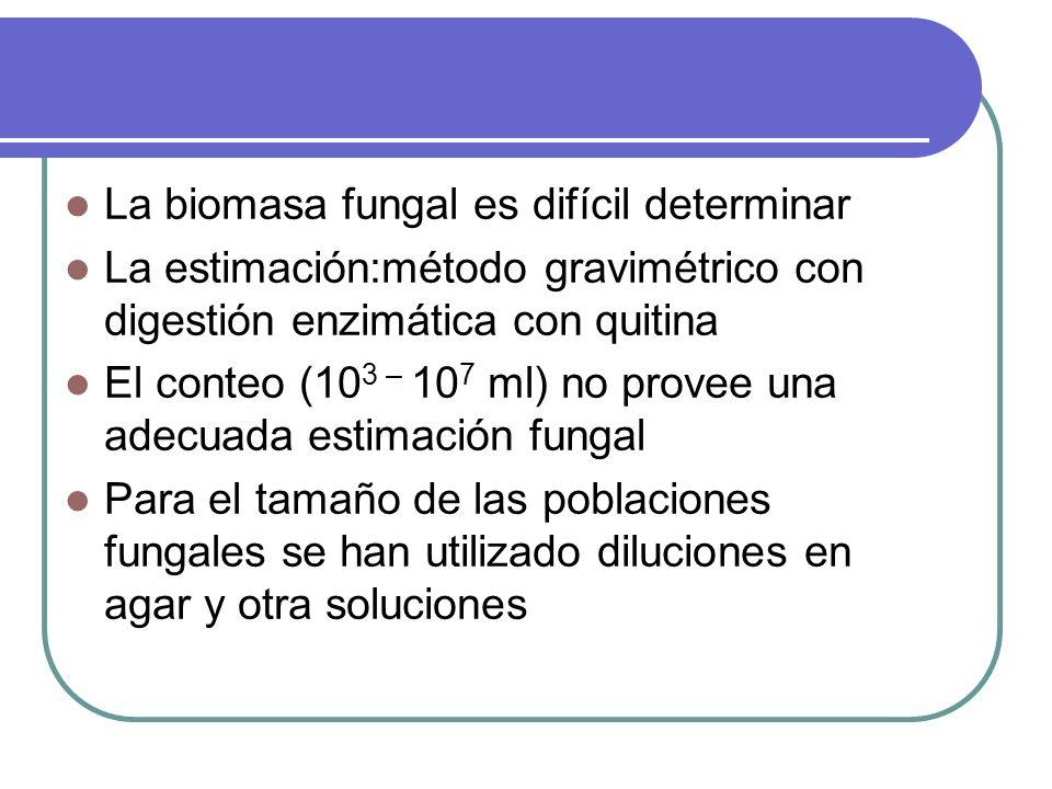 La biomasa fungal es difícil determinar La estimación:método gravimétrico con digestión enzimática con quitina El conteo (10 3 – 10 7 ml) no provee un