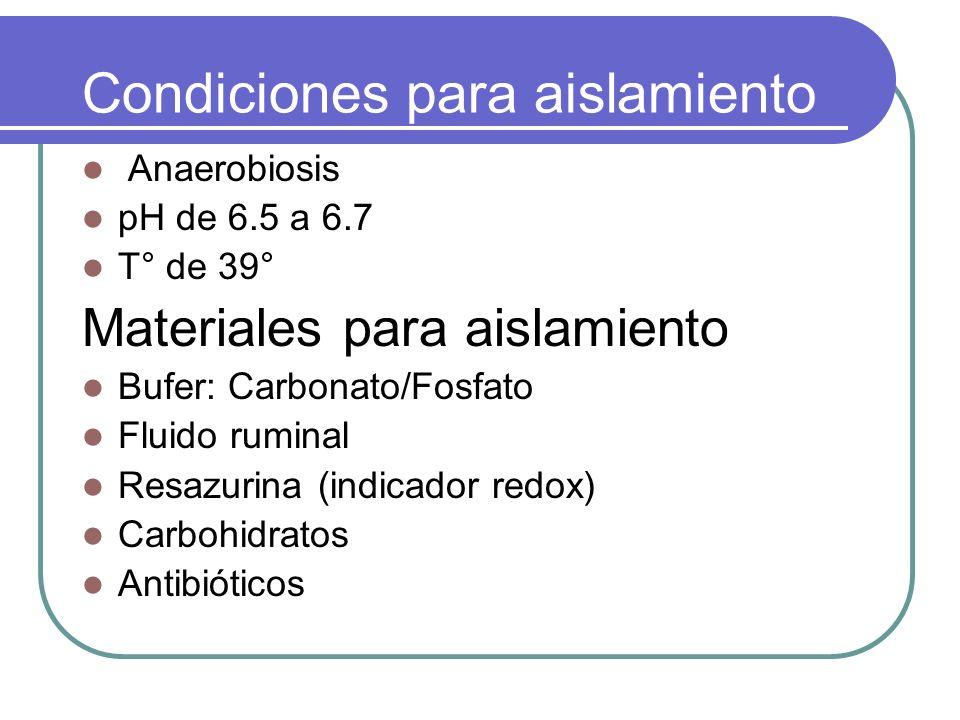 Condiciones para aislamiento Anaerobiosis pH de 6.5 a 6.7 T° de 39° Materiales para aislamiento Bufer: Carbonato/Fosfato Fluido ruminal Resazurina (in