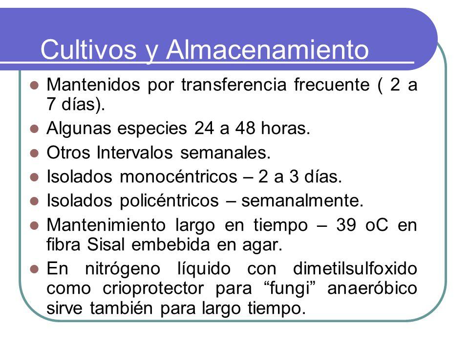 Cultivos y Almacenamiento Mantenidos por transferencia frecuente ( 2 a 7 días). Algunas especies 24 a 48 horas. Otros Intervalos semanales. Isolados m