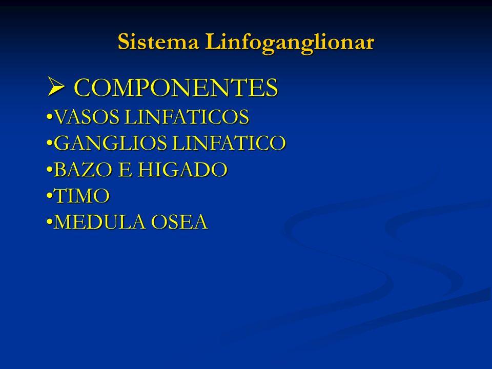 Sistema Linfoganglionar COMPONENTES COMPONENTES VASOS LINFATICOSVASOS LINFATICOS GANGLIOS LINFATICOGANGLIOS LINFATICO BAZO E HIGADOBAZO E HIGADO TIMOT
