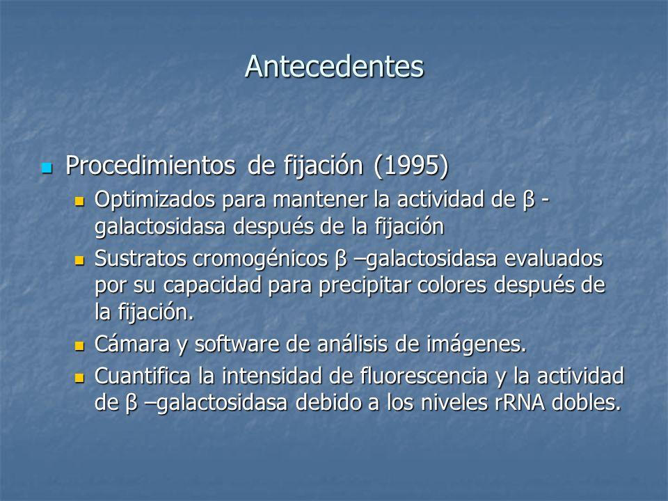 Antecedentes Procedimientos de fijación (1995) Procedimientos de fijación (1995) Optimizados para mantener la actividad de β - galactosidasa después d