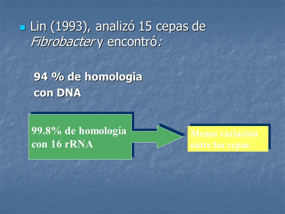 Lin (1993), analizó 15 cepas de Fibrobacter y encontró: Lin (1993), analizó 15 cepas de Fibrobacter y encontró: 94 % de homologia con DNA 99.8% de hom