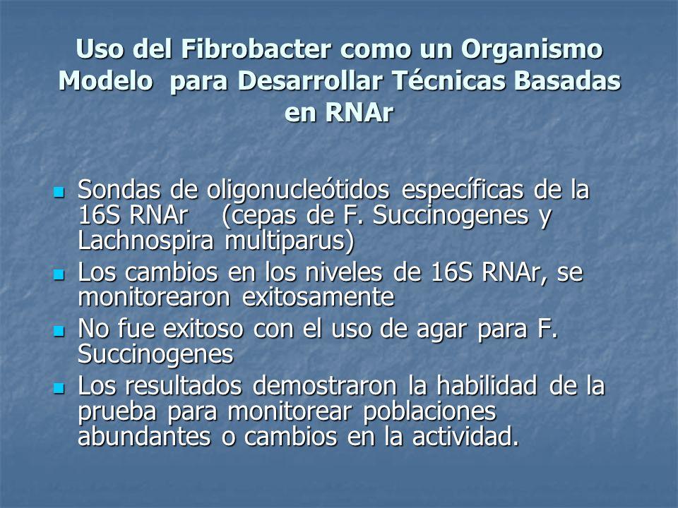 Uso del Fibrobacter como un Organismo Modelo para Desarrollar Técnicas Basadas en RNAr Sondas de oligonucleótidos específicas de la 16S RNAr (cepas de