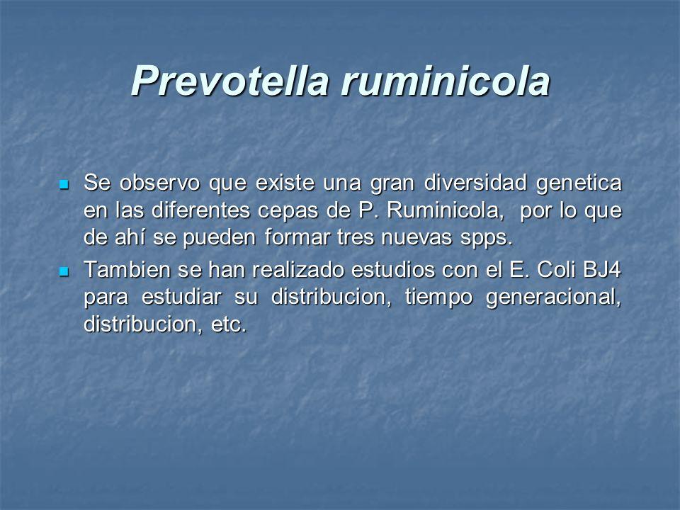 Prevotella ruminicola Se observo que existe una gran diversidad genetica en las diferentes cepas de P. Ruminicola, por lo que de ahí se pueden formar