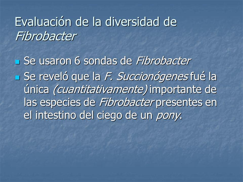 Evaluación de la diversidad de Fibrobacter Se usaron 6 sondas de Fibrobacter Se usaron 6 sondas de Fibrobacter Se reveló que la F. Succionógenes fué l