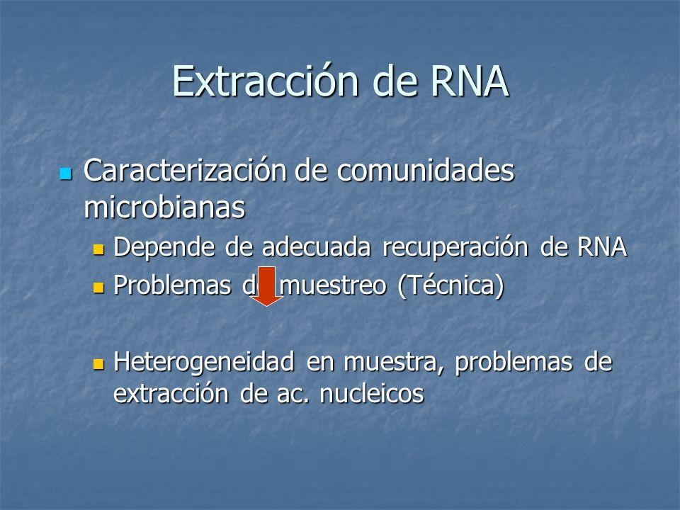 Extracción de RNA Caracterización de comunidades microbianas Caracterización de comunidades microbianas Depende de adecuada recuperación de RNA Depend