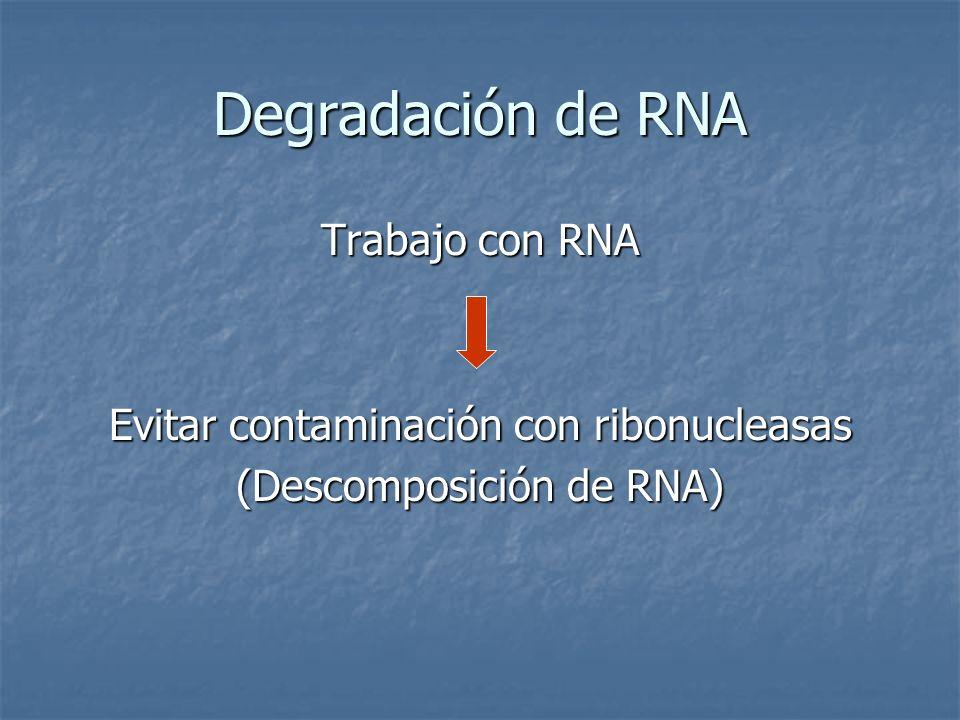 Degradación de RNA Trabajo con RNA Evitar contaminación con ribonucleasas (Descomposición de RNA)