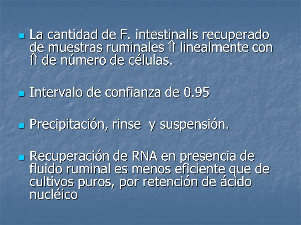 La cantidad de F. intestinalis recuperado de muestras ruminales linealmente con de número de células. La cantidad de F. intestinalis recuperado de mue