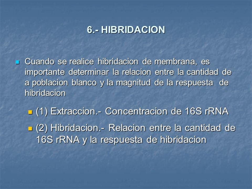 6.- HIBRIDACION Cuando se realice hibridacion de membrana, es importante determinar la relacion entre la cantidad de a poblacion blanco y la magnitud