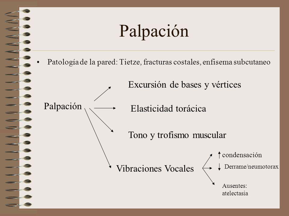 Palpación Patología de la pared: Tietze, fracturas costales, enfisema subcutaneo Palpación Excursión de bases y vértices Elasticidad torácica Tono y t