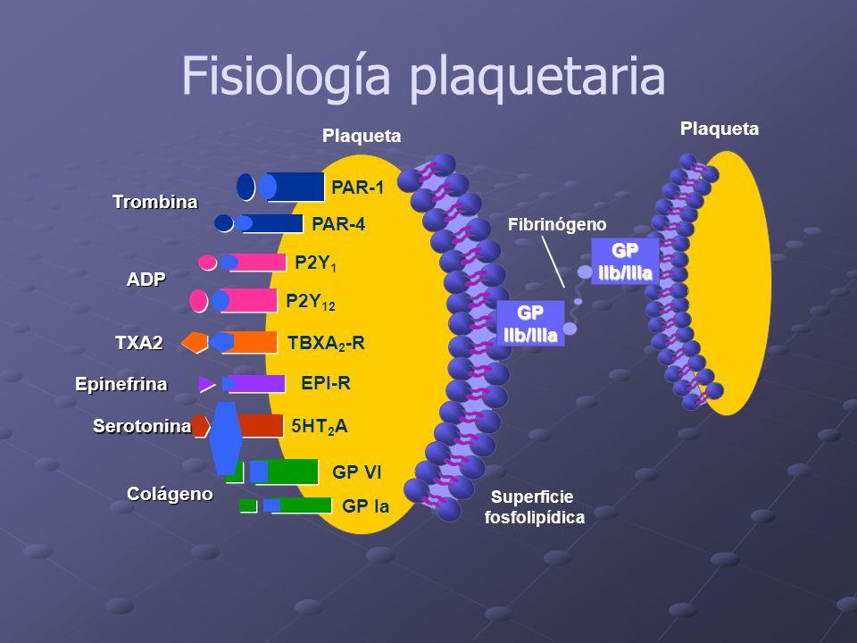 Plaqueta Trombina ADP Epinefrina Colágeno Superficie fosfolipídica GPIIb/IIIa Plaqueta Fibrinógeno GP Ia P2Y 1 GP VI PAR-4 TXA2 TBXA 2 -R Serotonina5H