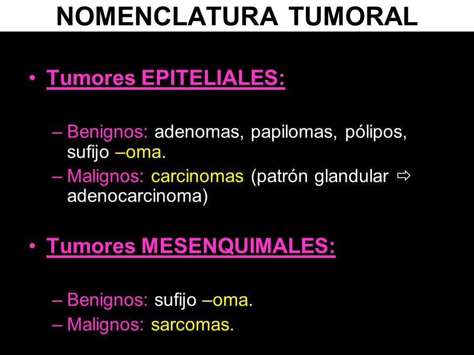 NOMENCLATURA TUMORAL Tumores EPITELIALES: –Benignos: adenomas, papilomas, pólipos, sufijo –oma. –Malignos: carcinomas (patrón glandular adenocarcinoma