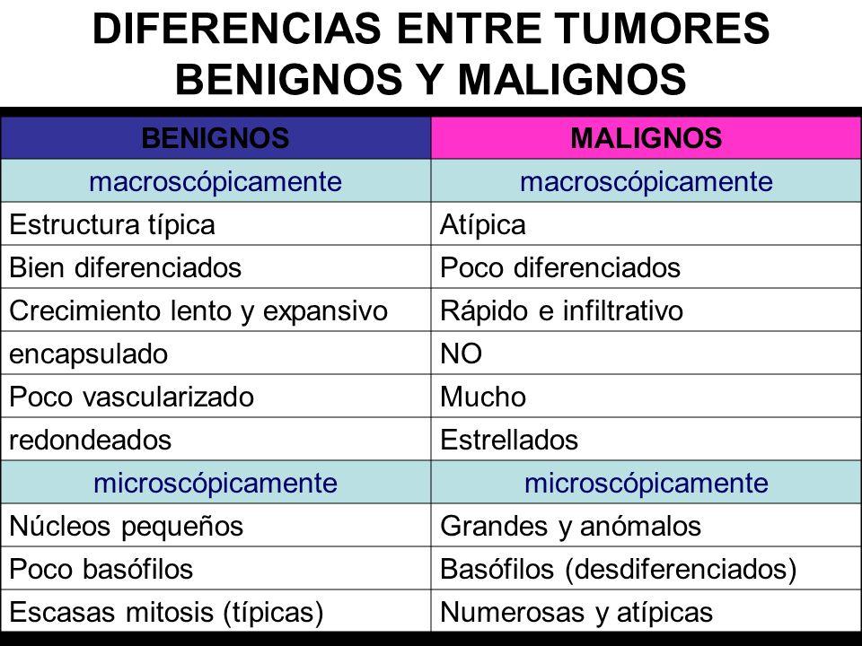 DIFERENCIAS ENTRE TUMORES BENIGNOS Y MALIGNOS BENIGNOSMALIGNOS macroscópicamente Estructura típicaAtípica Bien diferenciadosPoco diferenciados Crecimi