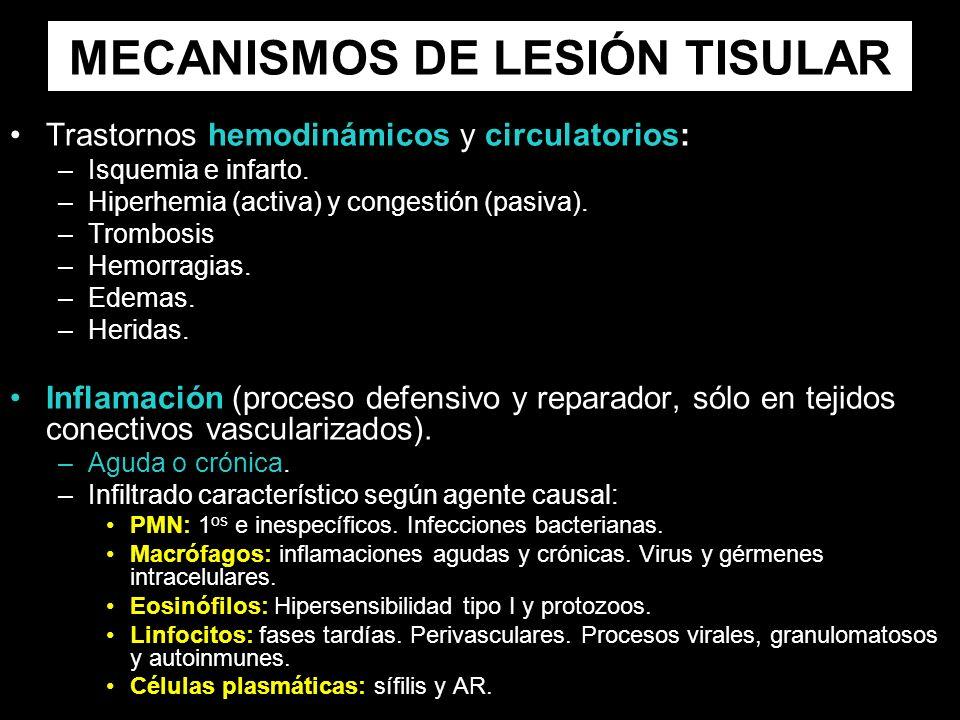 MECANISMOS DE LESIÓN TISULAR Trastornos hemodinámicos y circulatorios: –Isquemia e infarto. –Hiperhemia (activa) y congestión (pasiva). –Trombosis –He