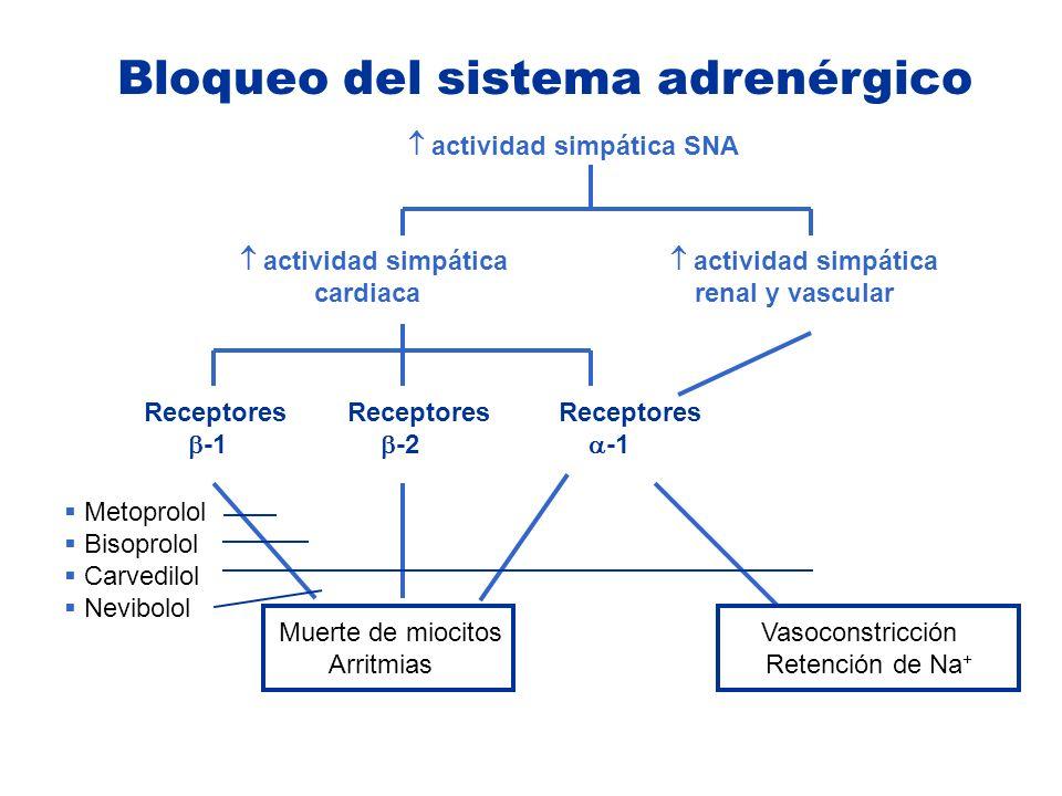 actividad simpática SNA actividad simpática actividad simpática cardiaca renal y vascular Receptores Receptores Receptores -1 -2 -1 Muerte de miocitos