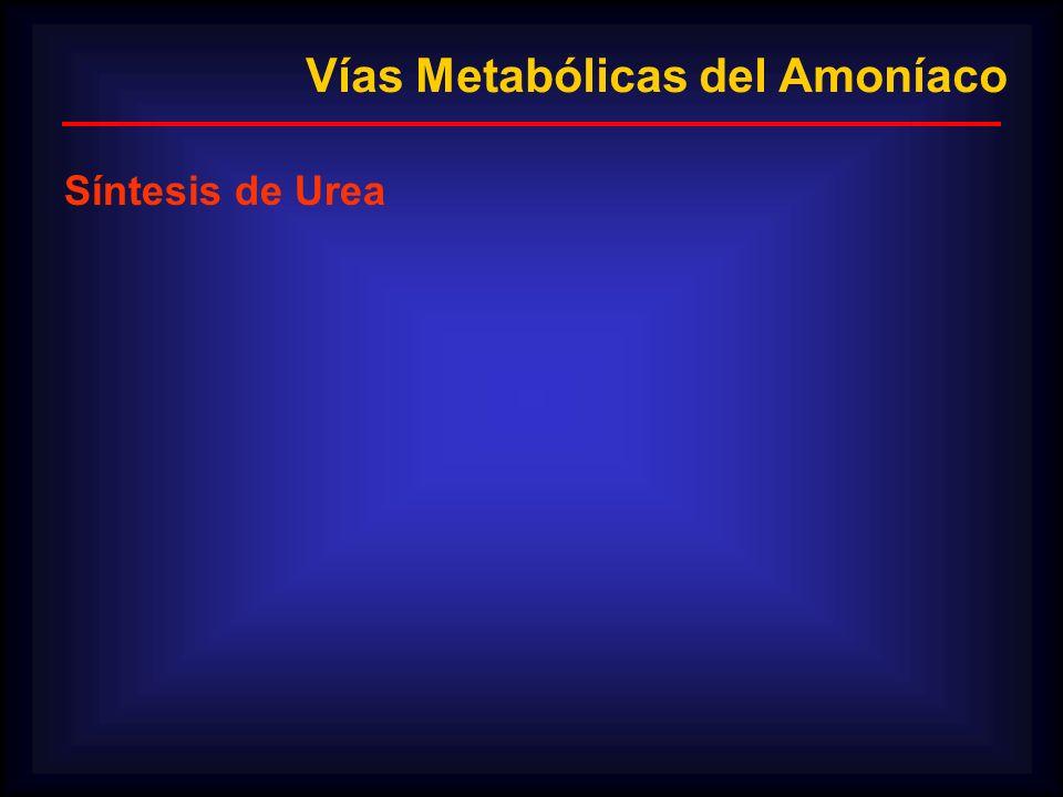 Vías Metabólicas del Amoníaco Síntesis de Urea