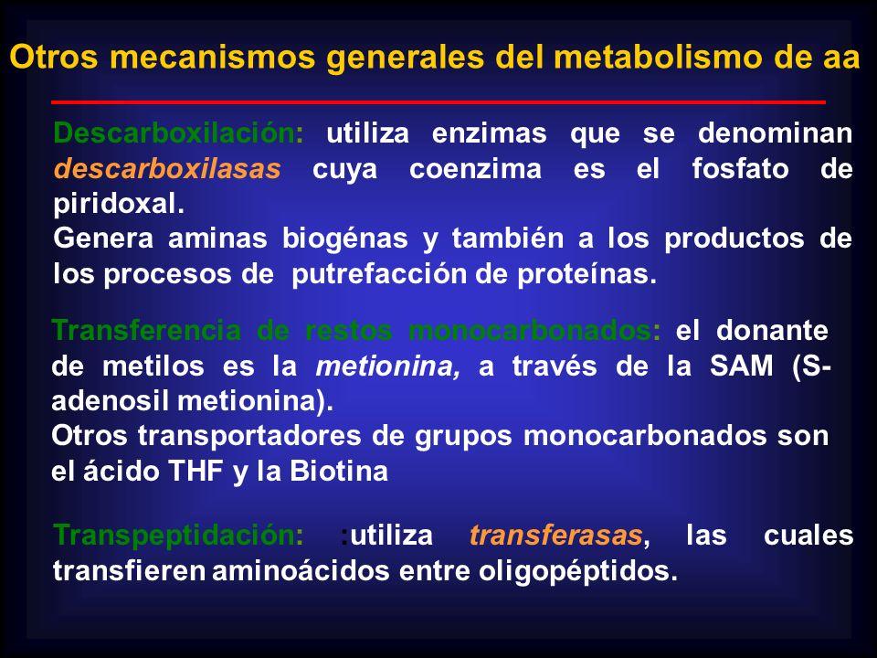 Otros mecanismos generales del metabolismo de aa Descarboxilación: utiliza enzimas que se denominan descarboxilasas cuya coenzima es el fosfato de pir