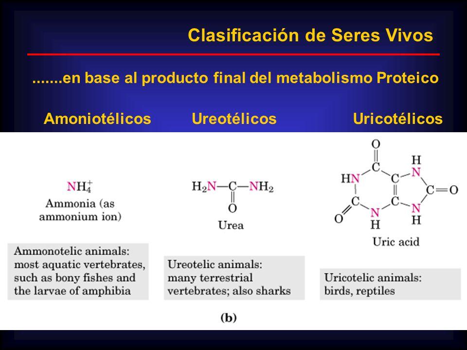 UreotélicosAmoniotélicosUricotélicos Clasificación de Seres Vivos.......en base al producto final del metabolismo Proteico