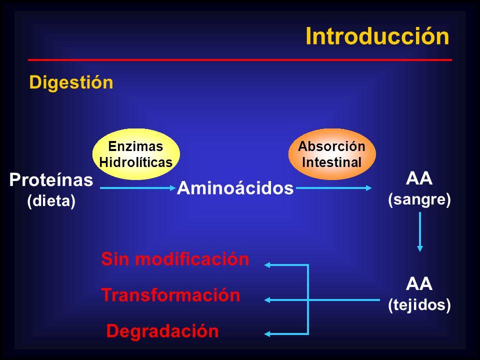 Introducción Proteínas (dieta) Aminoácidos Enzimas Hidrolíticas Absorción Intestinal AA (sangre) AA (tejidos) Sin modificación Transformación Degradac