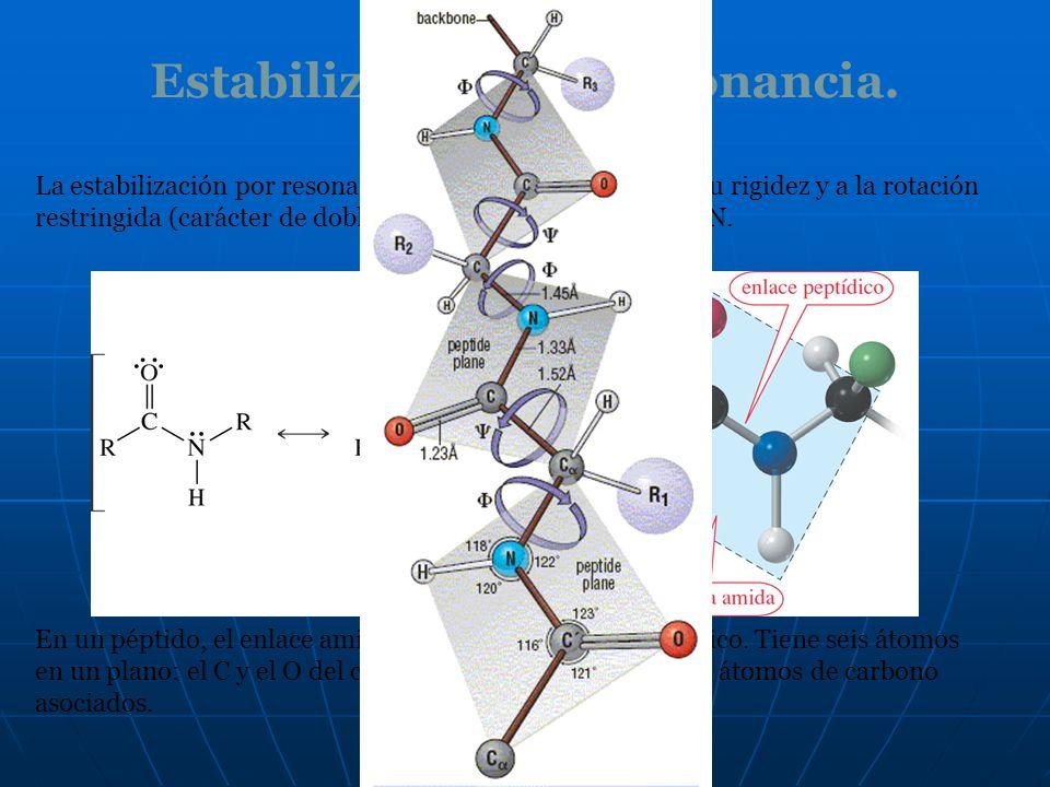 Estabilización por resonancia. La estabilización por resonancia de una amida da lugar a su rigidez y a la rotación restringida (carácter de doble enla