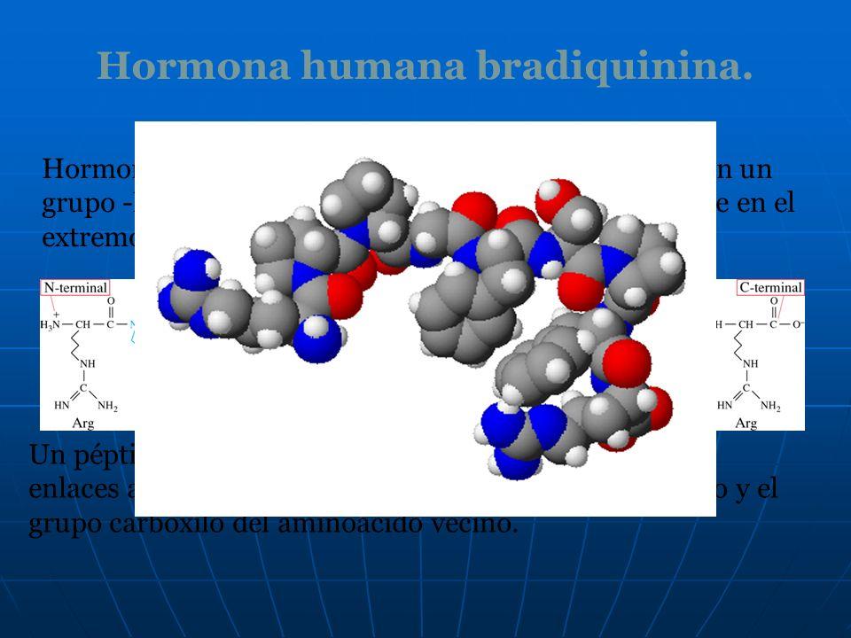 Hormona humana bradiquinina. Hormona humana bradiquinina es un nonapéptido con un grupo -NH 3 + en el extremo N terminal y un -COO - libre en el extre