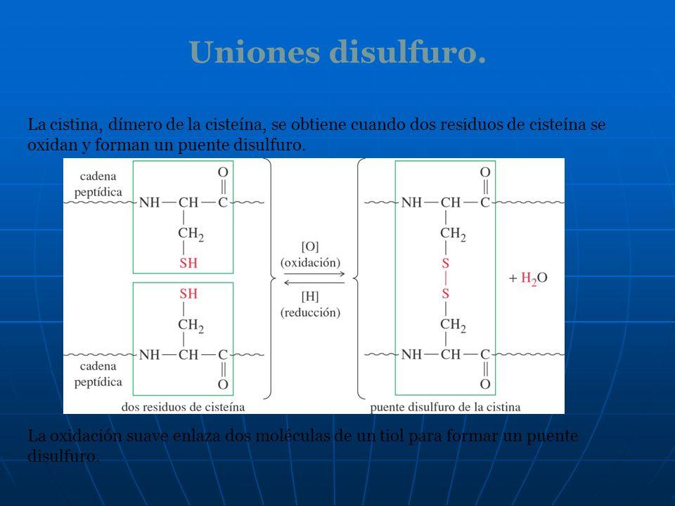 Uniones disulfuro. La cistina, dímero de la cisteína, se obtiene cuando dos residuos de cisteína se oxidan y forman un puente disulfuro. La oxidación