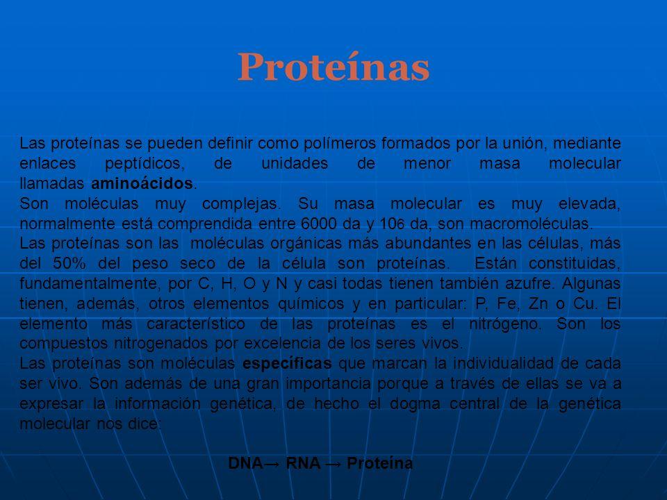 Proteínas Las proteínas se pueden definir como polímeros formados por la unión, mediante enlaces peptídicos, de unidades de menor masa molecular llama