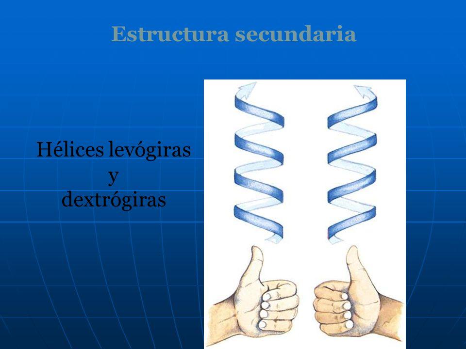 Hélices levógiras y dextrógiras Estructura secundaria