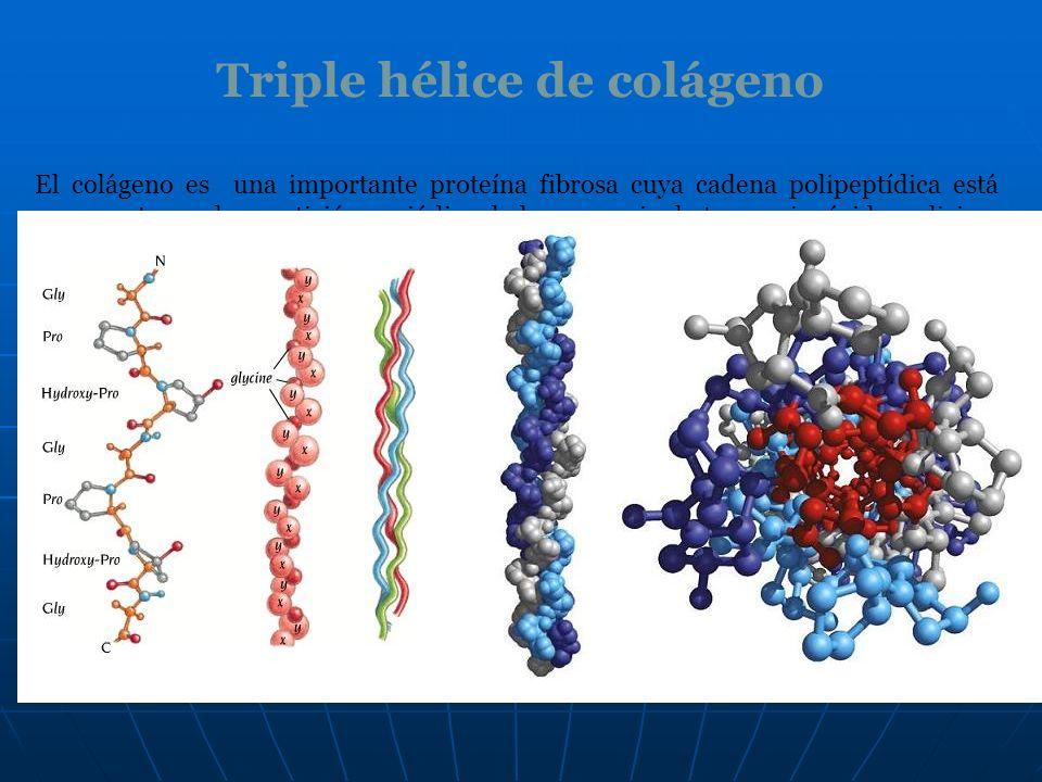 Triple hélice de colágeno El colágeno es una importante proteína fibrosa cuya cadena polipeptídica está compuesta por la repetición periódica de la se