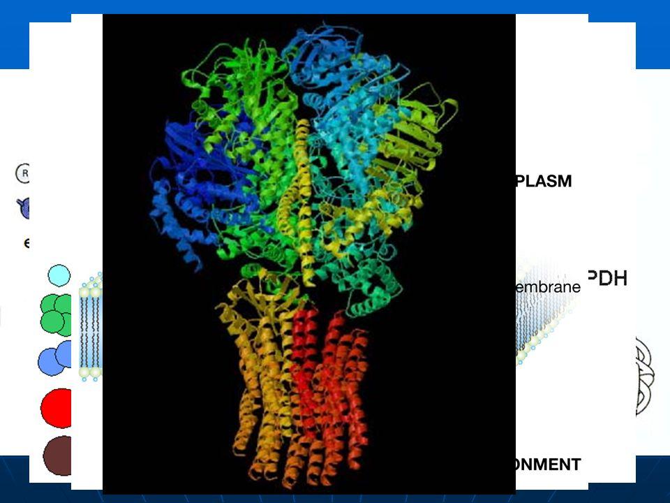 Estructuras de una proteína La estructura primaria es la estructura enlazada covalentemente, incluyendo la secuencia de aminoácidos y los puentes disu