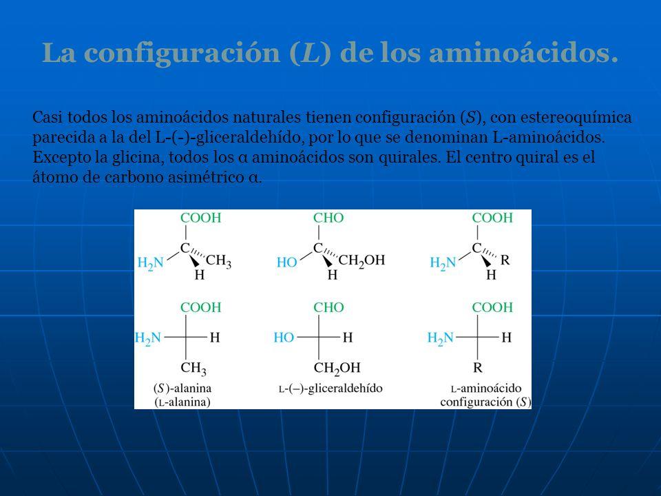 La configuración (L) de los aminoácidos. Casi todos los aminoácidos naturales tienen configuración (S), con estereoquímica parecida a la del L-(-)-gli