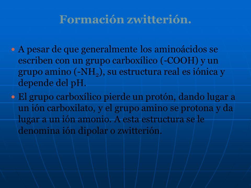 Formación zwitterión. A pesar de que generalmente los aminoácidos se escriben con un grupo carboxílico (-COOH) y un grupo amino (-NH 2 ), su estructur