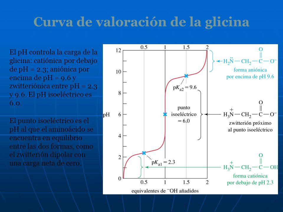 Curva de valoración de la glicina El pH controla la carga de la glicina: catiónica por debajo de pH = 2.3; aniónica por encima de pH = 9.6 y zwitterió