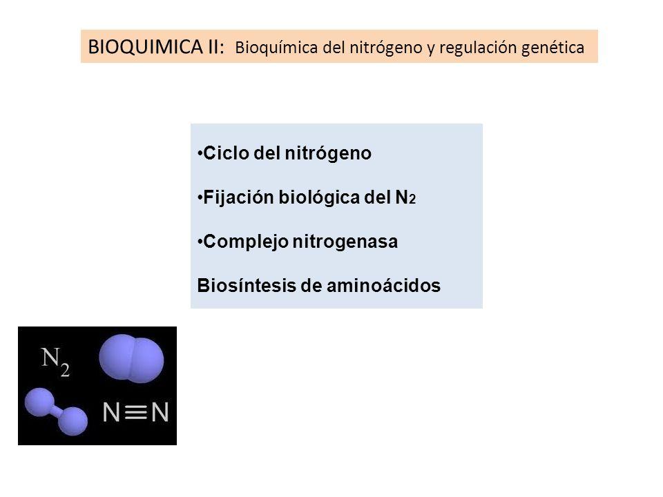 Ciclo del nitrógeno Fijación biológica del N 2 Complejo nitrogenasa Biosíntesis de aminoácidos BIOQUIMICA II: Bioquímica del nitrógeno y regulación ge