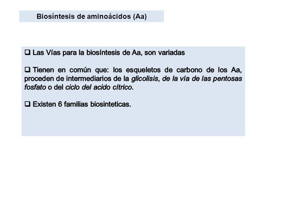 Biosíntesis de aminoácidos (Aa)