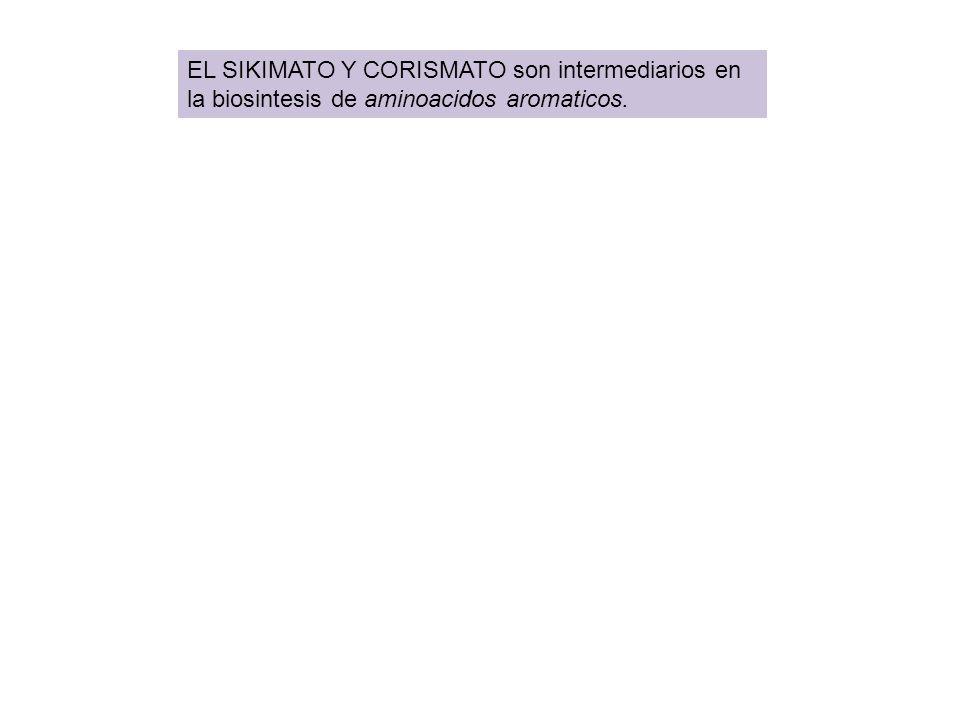 EL SIKIMATO Y CORISMATO son intermediarios en la biosintesis de aminoacidos aromaticos.
