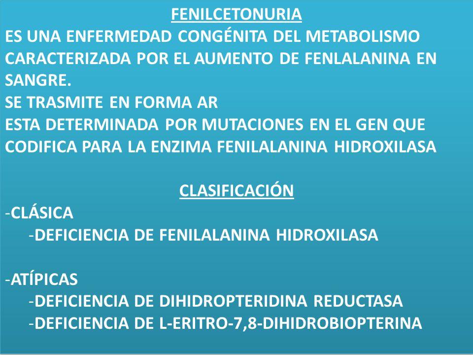 Déficit de fenilanina hidroxilasa Incidencia: 1: 10.000-1:20.000 Herencia autosómica recesiva Gen en el cromosoma 12q Eliminación urinaria de ácido fenilpirúvico