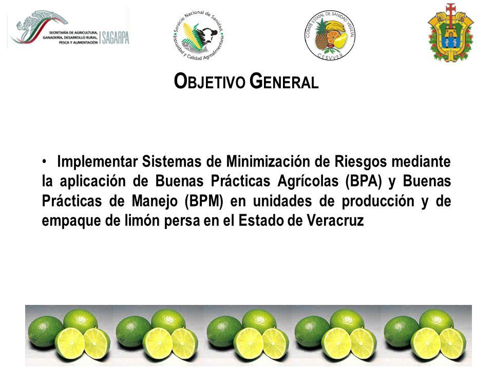 A REA DE INFLUENCIA Acciones dirigidas al cultivo de limón persa ( Citrus latifolia, Tan.) REGION CENTRO DEL ESTADO DE VERACRUZ MAYOR PRODUCCIÓN 80% MAYOR EXPORTACIÓN MARTINEZ DE LA TORRE CUITLAHUAC APORTACIÓN FEDERAL
