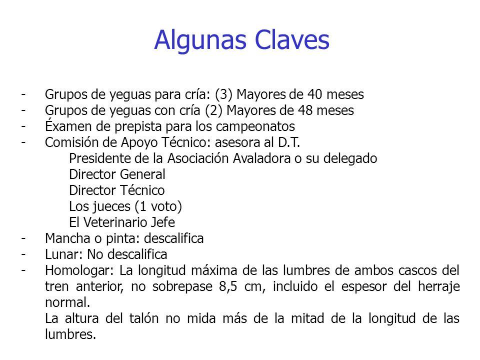 Algunas Claves -Grupos de yeguas para cría: (3) Mayores de 40 meses -Grupos de yeguas con cría (2) Mayores de 48 meses -Éxamen de prepista para los ca
