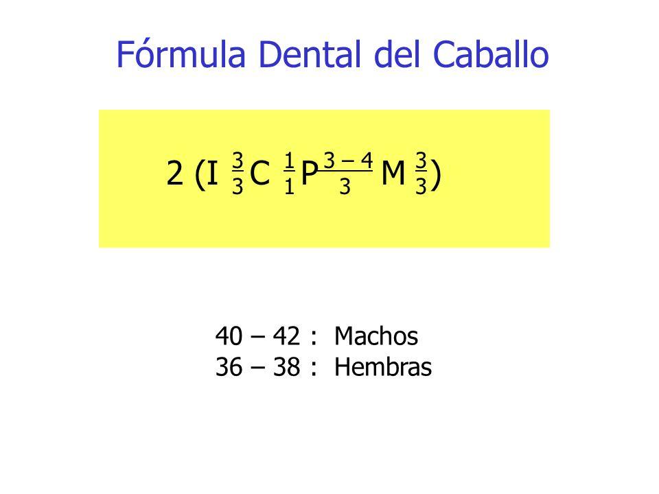 Fórmula Dental del Caballo 2 (I C P M) 3333 1111 3 – 4 3 3333 40 – 42 : Machos 36 – 38 : Hembras