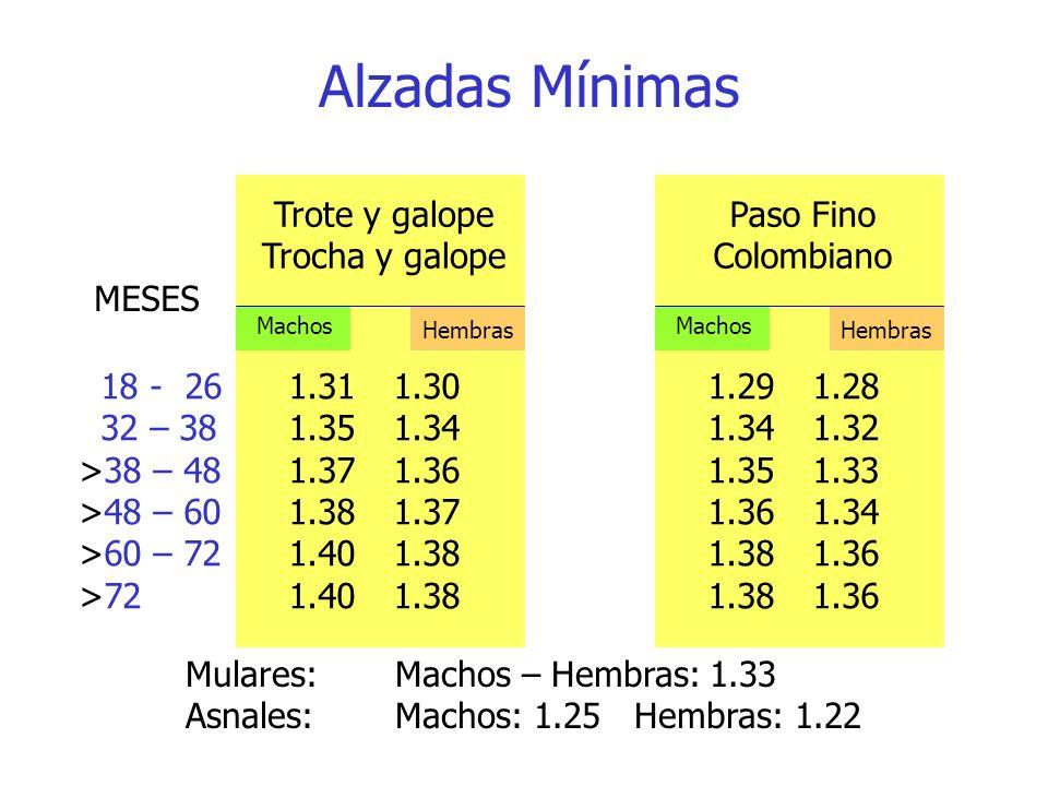 Alzadas Mínimas Trote y galope Trocha y galope Paso Fino Colombiano 18 - 261.311.301.291.28 32 – 381.351.341.341.32 >38 – 481.371.361.351.33 >48 – 601