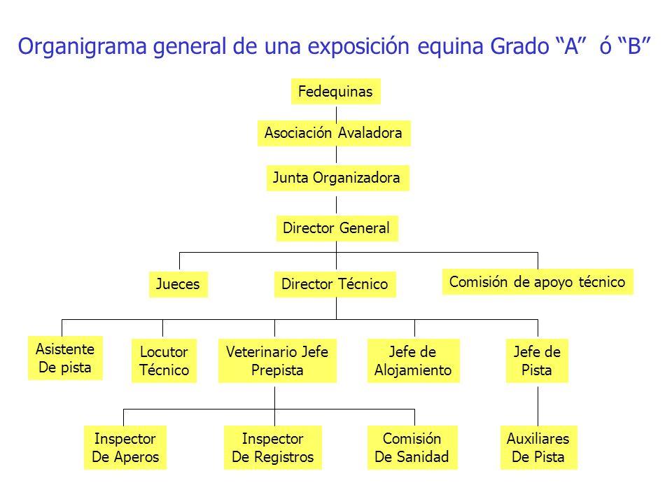 Organigrama general de una exposición equina Grado A ó B Fedequinas Asociación Avaladora Junta Organizadora Director General Director Técnico Comisión