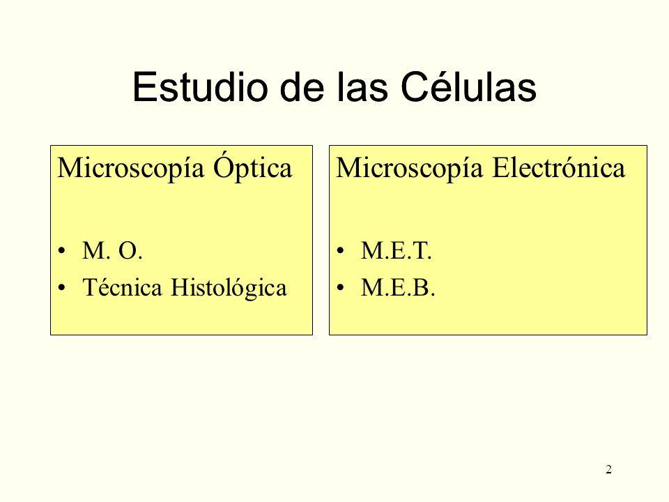 2 Estudio de las Células Microscopía Óptica M. O. Técnica Histológica Microscopía Electrónica M.E.T. M.E.B. Estudio de las Células