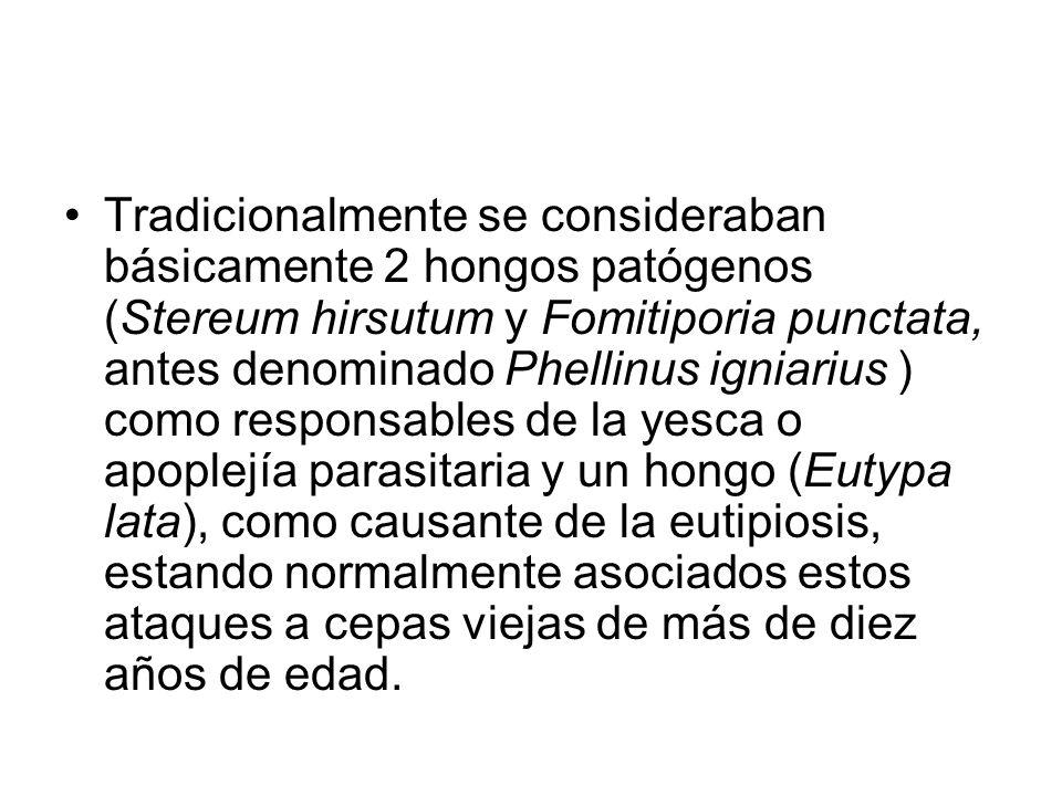 Tradicionalmente se consideraban básicamente 2 hongos patógenos (Stereum hirsutum y Fomitiporia punctata, antes denominado Phellinus igniarius ) como responsables de la yesca o apoplejía parasitaria y un hongo (Eutypa lata), como causante de la eutipiosis, estando normalmente asociados estos ataques a cepas viejas de más de diez años de edad.