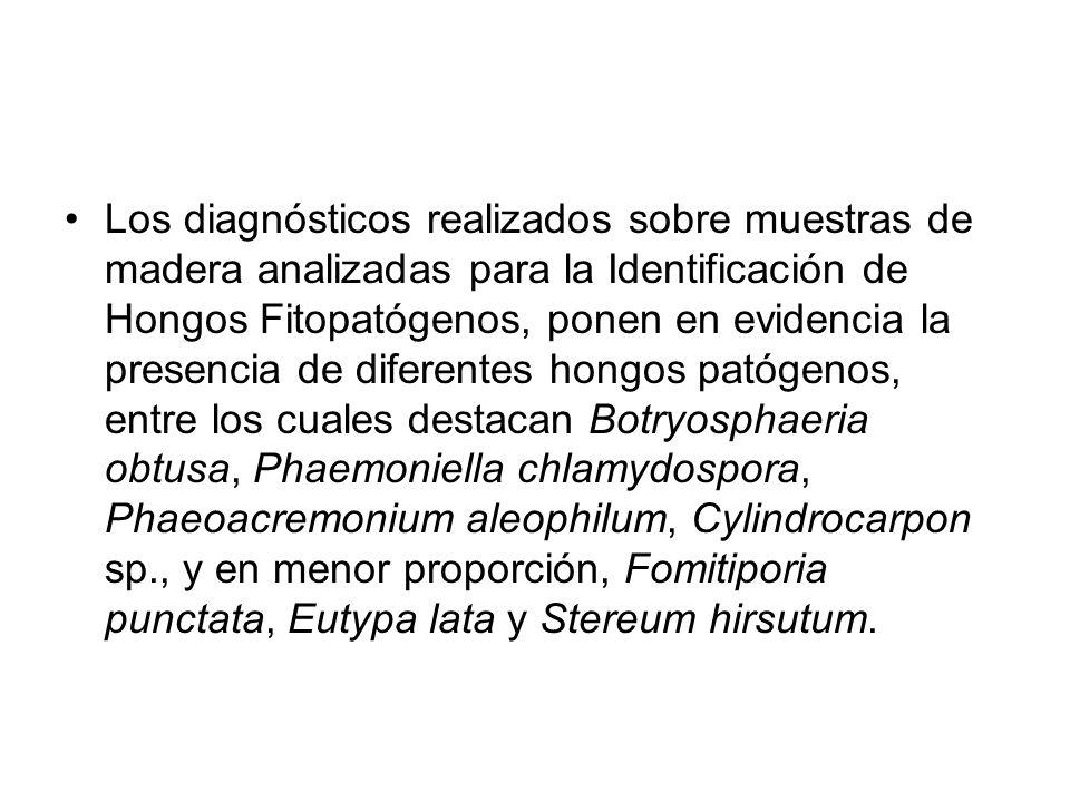 Los diagnósticos realizados sobre muestras de madera analizadas para la Identificación de Hongos Fitopatógenos, ponen en evidencia la presencia de diferentes hongos patógenos, entre los cuales destacan Botryosphaeria obtusa, Phaemoniella chlamydospora, Phaeoacremonium aleophilum, Cylindrocarpon sp., y en menor proporción, Fomitiporia punctata, Eutypa lata y Stereum hirsutum.