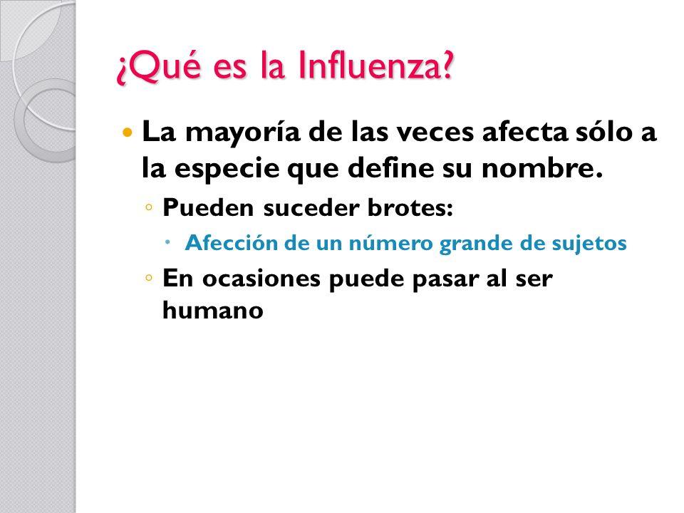 ¿Qué es la Influenza? La mayoría de las veces afecta sólo a la especie que define su nombre. Pueden suceder brotes: Afección de un número grande de su
