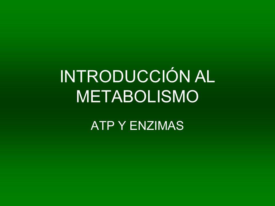 INTRODUCCIÓN AL METABOLISMO ATP Y ENZIMAS